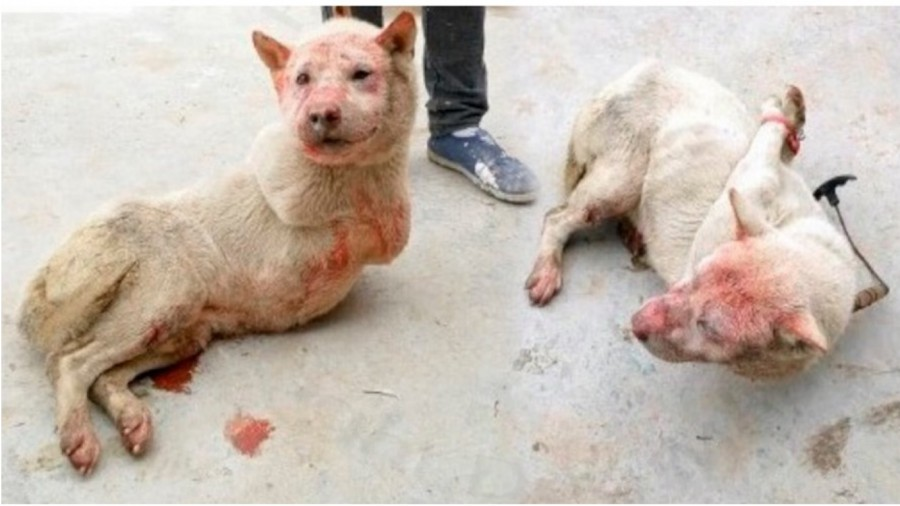 Human Killing Dogs And Cats