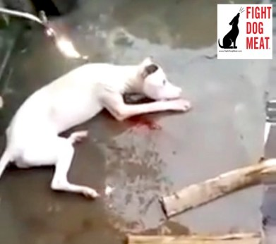 Dog Meat Trade_2
