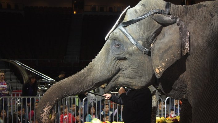 Elephant_Circuses
