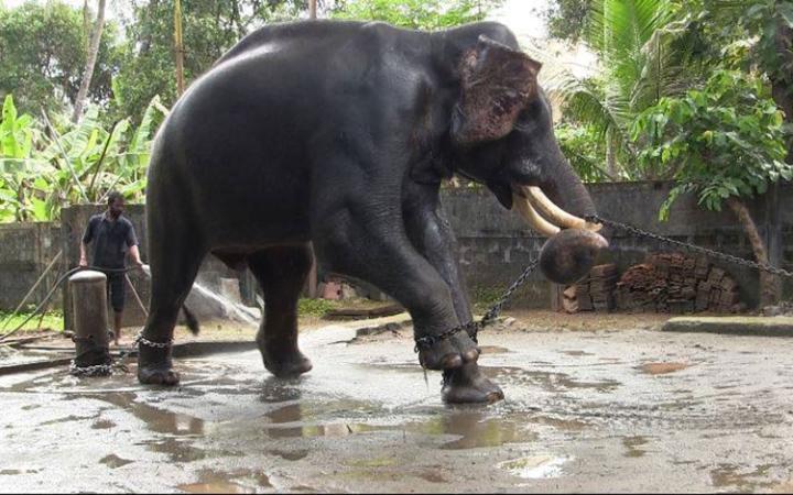 Elephant_Gods in Shackles