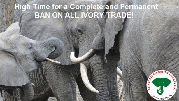 Elephant_Petition