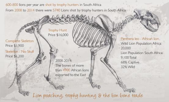 Lion Bone Trade