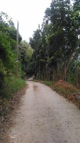 Concrete road Mt Gulugod Baboy