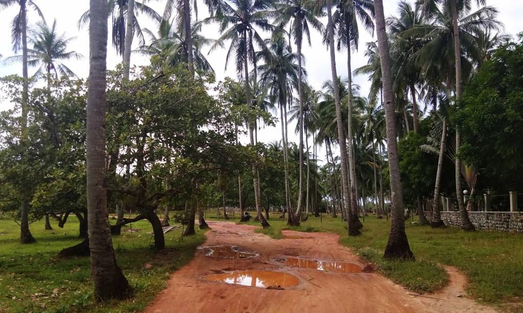 How the road to Nacpan Beach looks like