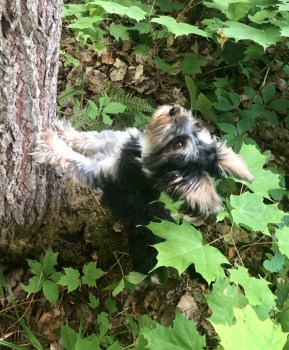 Mia the adorable puppy looking at a squirrel. My miracle of meaning
