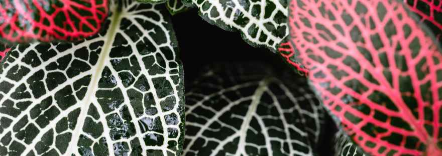a close up shot of green and red leaves