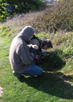 A new and surprising site for Martin's Ramping Fumitory (Fumaria reuteri), discovered by Paul Stanley in spring 2009 at Freshwater Bay, is verified by Eric Clement FLS. © GT