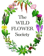 The Wild Flower Society