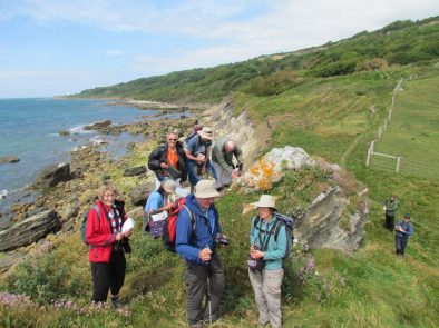 Looking at Lichens