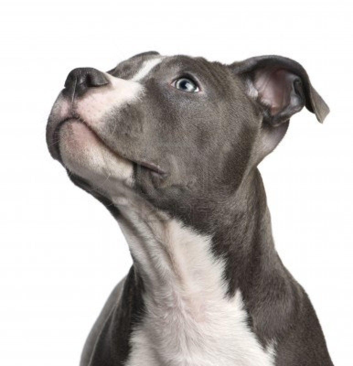 Dog Training Los Angeles Ca