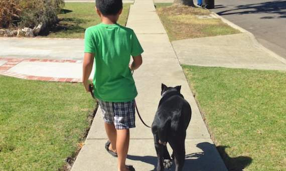 family protection dog training in Los Angeles