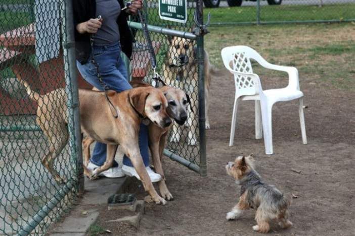 Los Angeles Dog Parks