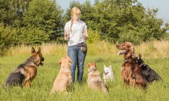 Finding the best LA dog trainers for you