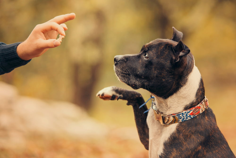Best LA dog training approach