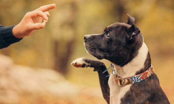 Best LA dog training approach