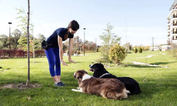 Dog obedience training in LA
