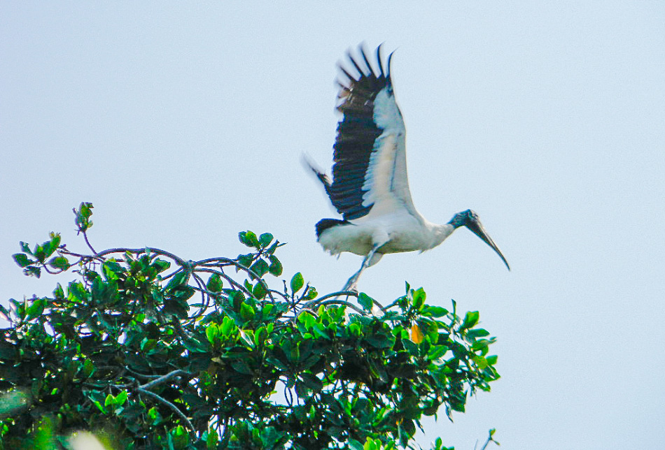 aves_ixtapa_.jpg