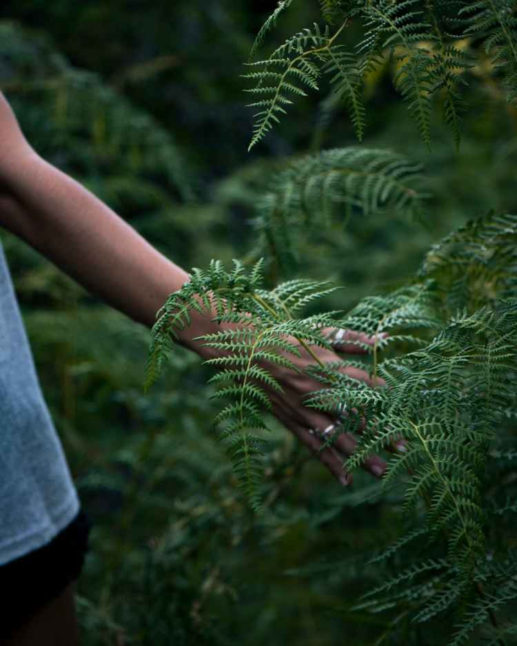 person touching green plant
