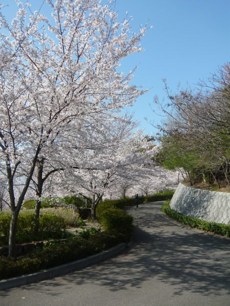 お花見,松山総合公園