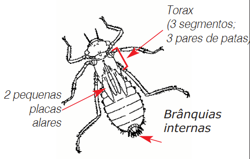 Larva libélulas