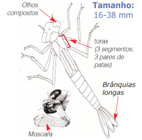 larva libelilnhas