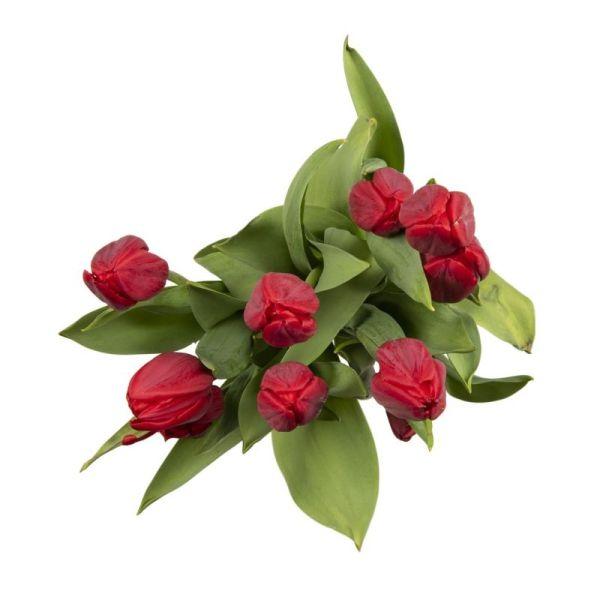 Izami Tulip Parcel