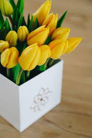 Stunning Tulip Box - Yellow
