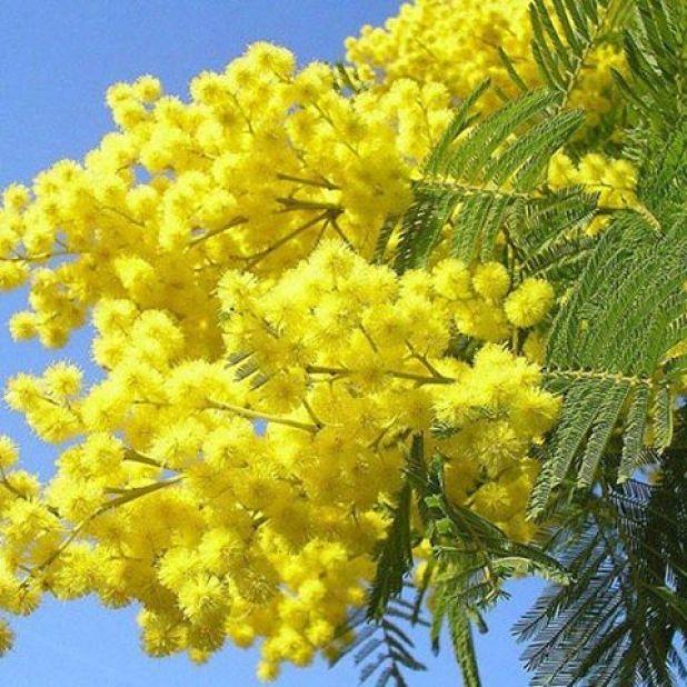 Картинка на 8 Марта: красивые цветы