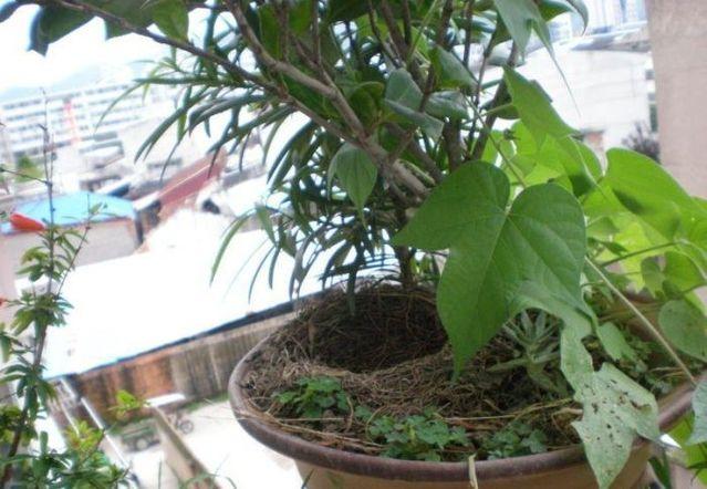 Surprise on the balcony (12 pics)