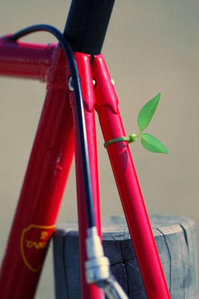 A Cute but Strange Idea(16 pics)