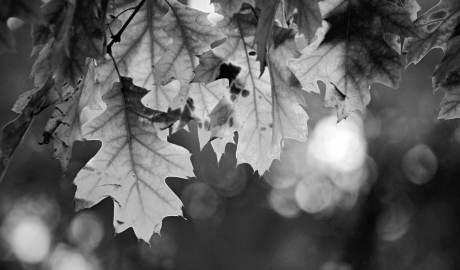 It is fall
