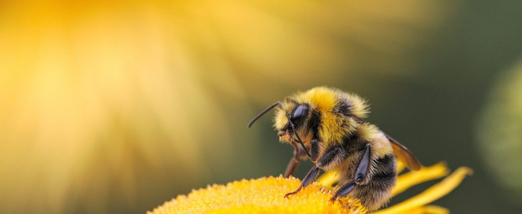 No pollination allowed...