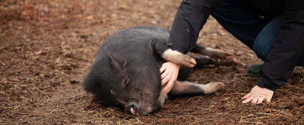 A Danish girl - and a pig farm - kept Goldman in Denmark