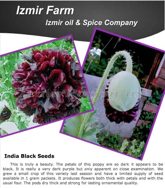 Izmir India Black PAPAVER SOMNIFERUM POPPY SEEDS