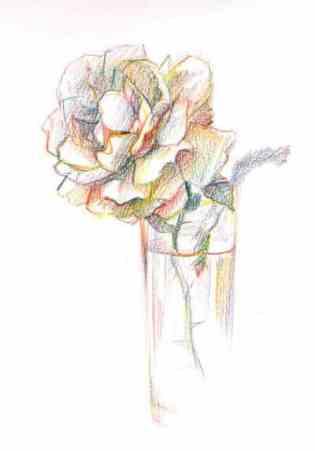 зарисовки карандашом роза