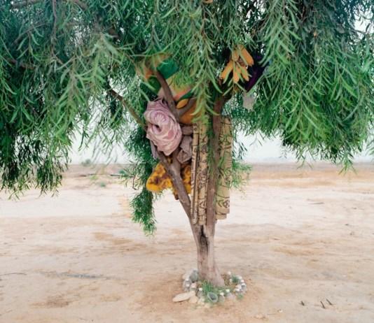 ron amir foto sivatagban fa