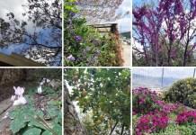 izraeli virágok kert