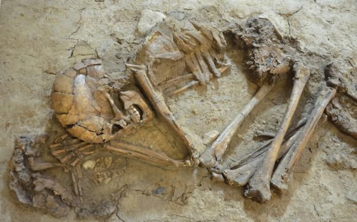 Egy nő és egy kutyakölyök csontváza - fotó: Gonen Sharon professzor / Tel Hai Főiskola