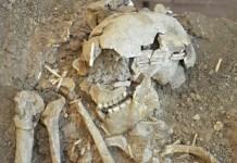 Egy Natúf-kultúrából való ember koponyája - fotó: Gonen Sharon professzor / Tel Hai Főiskola