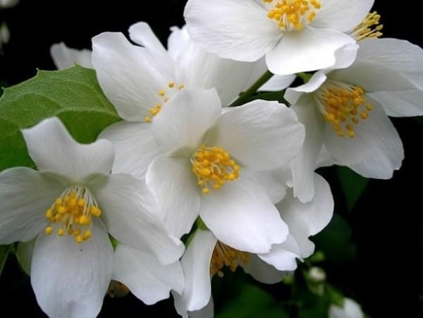 poruke i jezik cvijeća