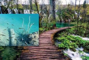 Nacionalni park Plitvička jezera nezaobilazno mjesto turističkih obilazaka, tradicionalna kuhinja, jeleni, srne, pastrve, divlje životinje u rezervatu prirode, hoteli na plitvičkim jezerima