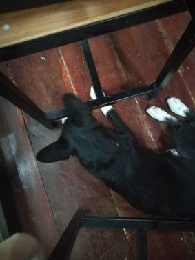 Study budy puppy
