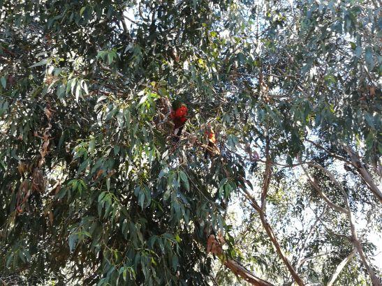 Wild bright birds like this everywhere in aus :)