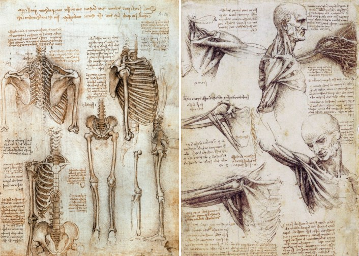 anatomy-of-human-body-da-vinci