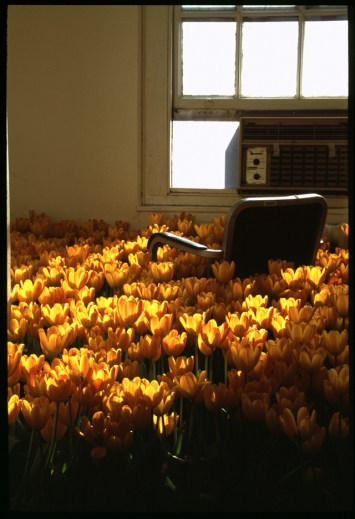"""Bloom"" Anna Schuleit, 2003"