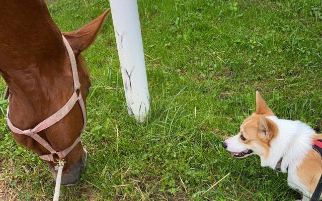 Günther et son copain le cheval