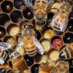 bee2images