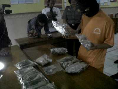 AS yang banting setir menjadi penjual ganja memperlihatkan barang dagangannya dalam ekspose, Kamis (20/2/2014). (JABARTODAY/AVILA DWIPUTRA)
