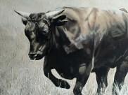 Malcolm Bowling bull