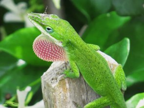 scary lizards, lizards are scary